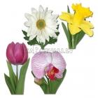Klasiskās ziedu kolekcija