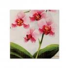Salvetes ar attēlu Rozā orhideja 33cm, 20.gab.